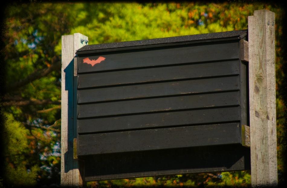 Bat Box - Tolka Rover